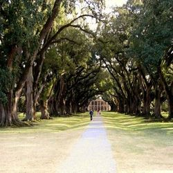 The Oak Alley Plantation